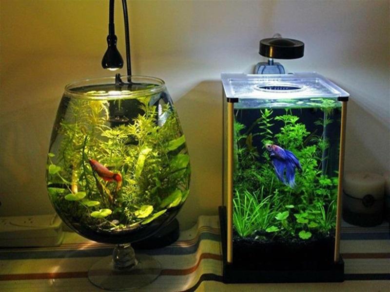 cá phù hợp trong bể