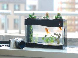 lựa chọn đặt bể cá trong phòng ngủ