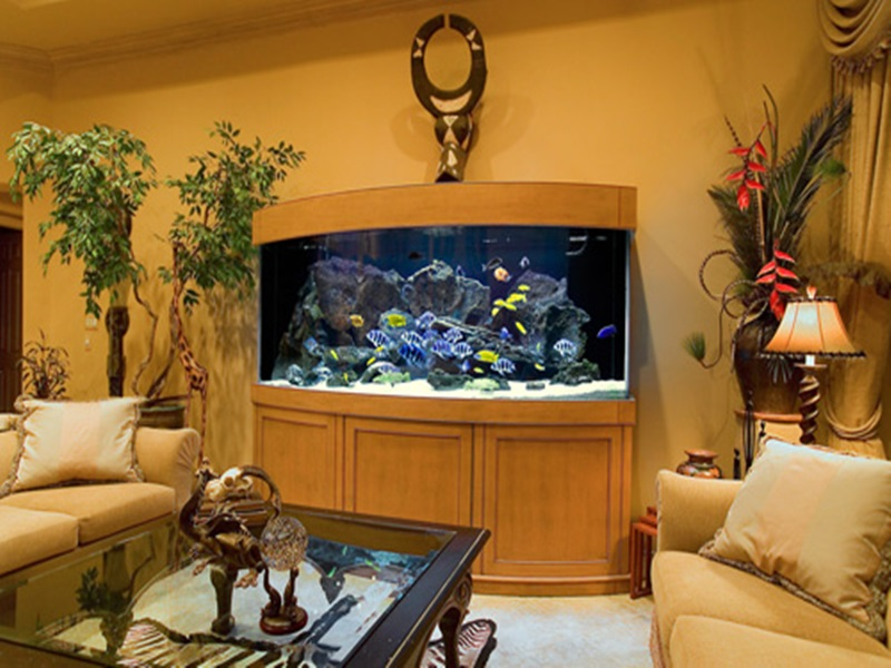 bể cá đặt trong nhà