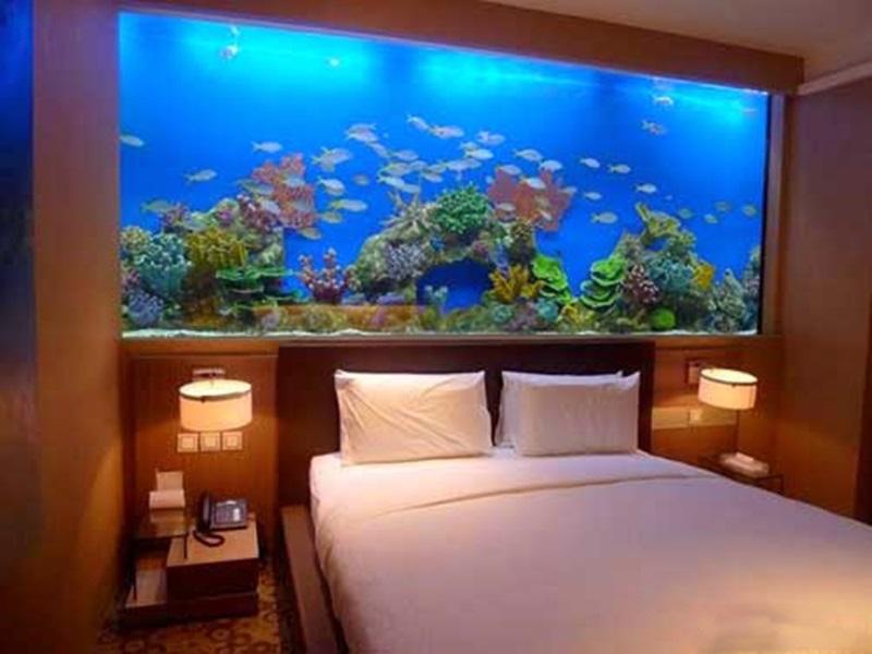 tư vấn đặt bể cá trong phòng ngủ